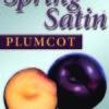 New Generation Fruit – Spring Satin Plumcot