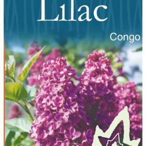 Lime Magik Acacia Cognata Buy Trees Online Blerick Tree Farm