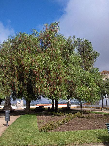 Shade Garden Under Tree Shrubs