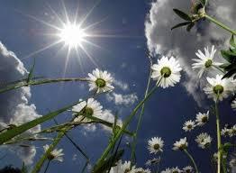 Full Sun Tolerant