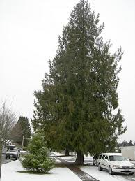 Browse by Tree Size