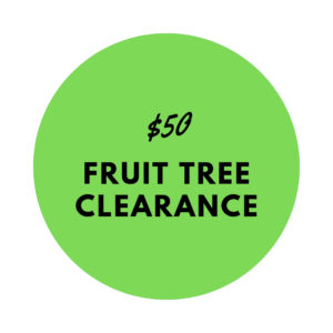 $50 fruit tree clearance