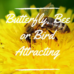 Butterfly, Bee or Bird Attracting