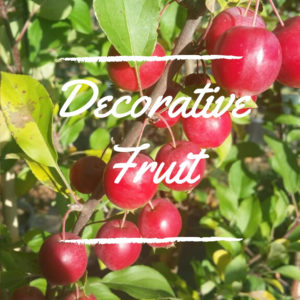Decorative Fruit