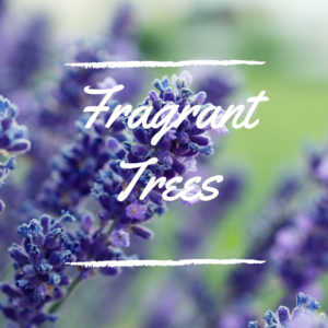 Fragrant Trees