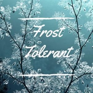Frost Tolerant