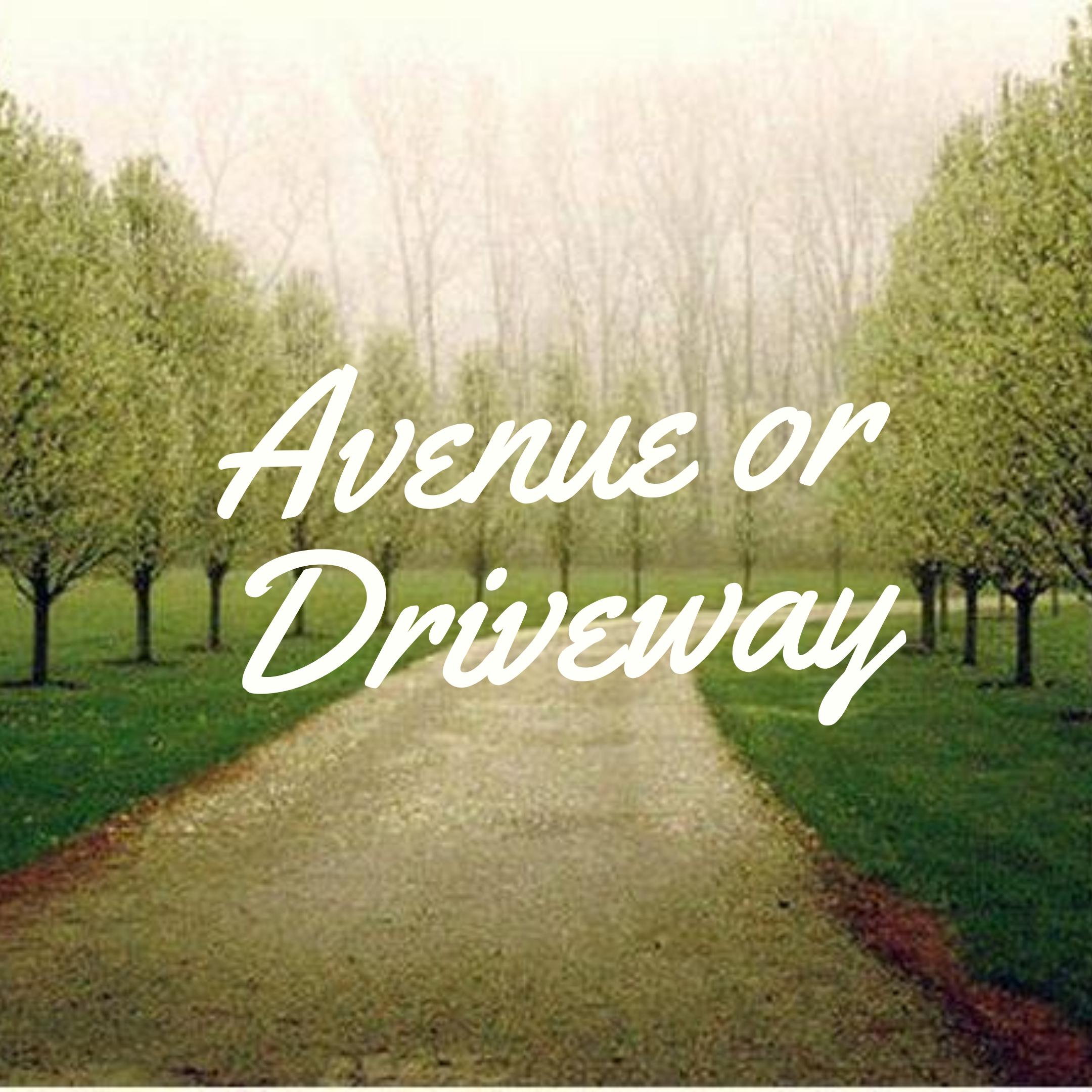 Avenue or Driveway